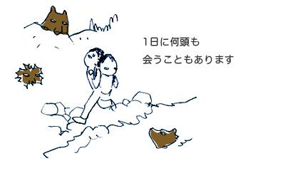 知床沼ヒグマルール情報